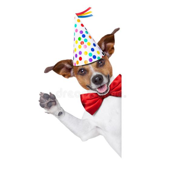 Happy Birthday Dog Stock Of Copy Anniversary