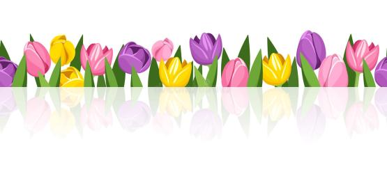 horizontal vector tulips flowers tulip seamless colorful background flower
