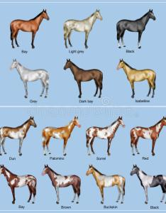 Download horse color chart stock illustration of brown also rh dreamstime