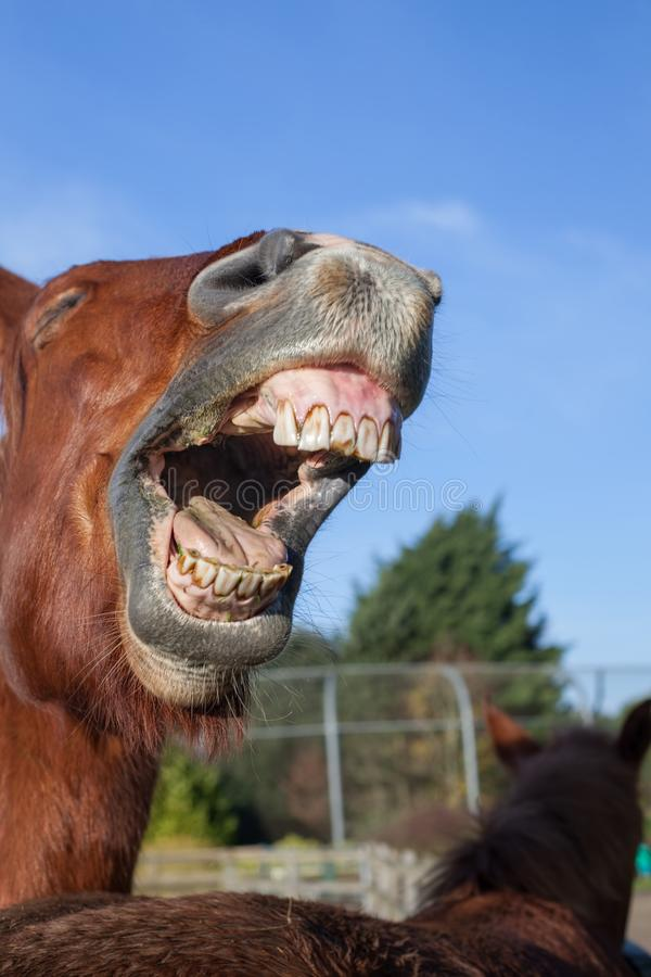 Out Loud Laugh Horse