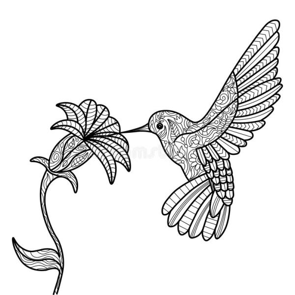 Hummingbird Coloring Book Adults Vector Stock - Illustration Of Pattern Nature 71196296