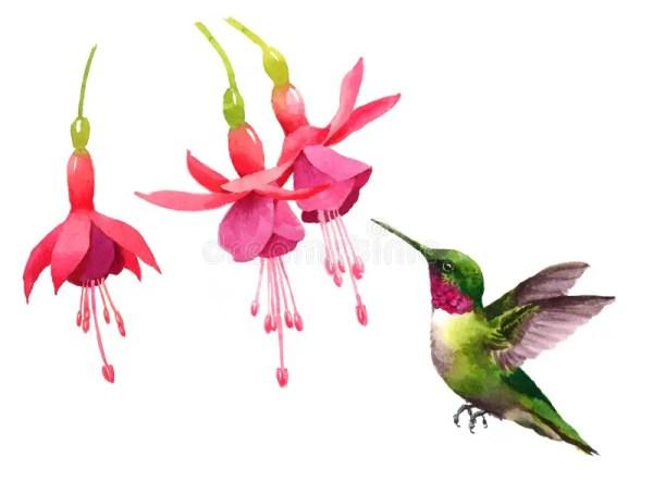 hummingbird flying fuchsia