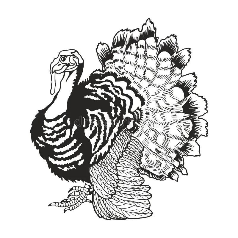 De Dessin Dinde Stock Illustrations, Vecteurs, & Clipart