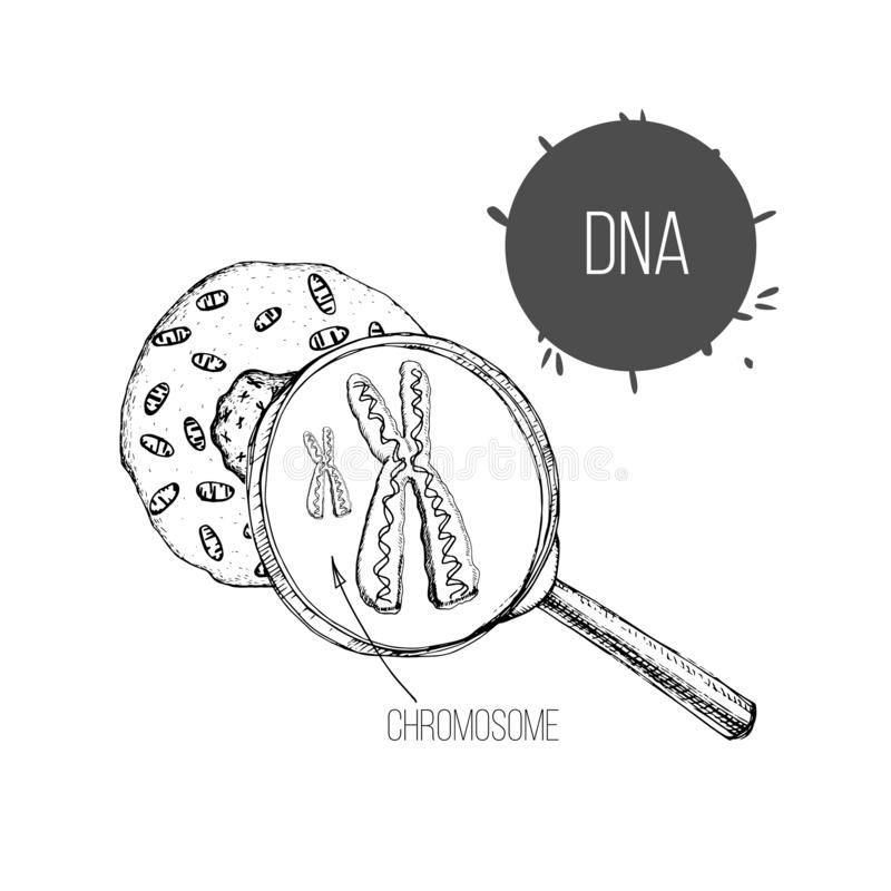 DNA and cell stock illustration. Illustration of inside