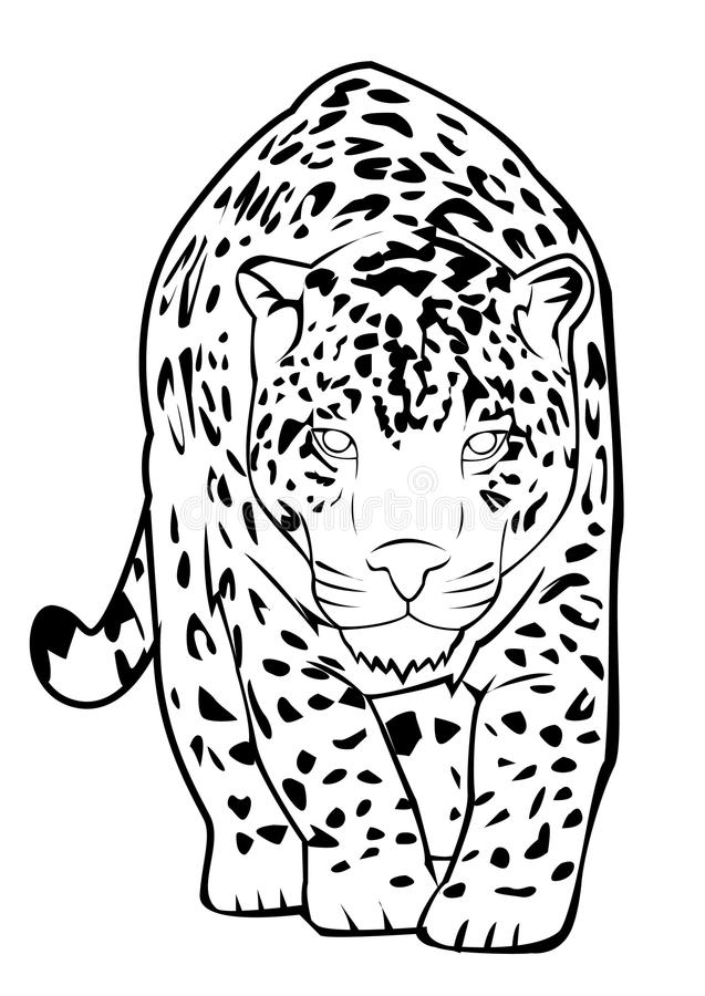 Jaguar stock vector. Image of front, danger, eyes, angry
