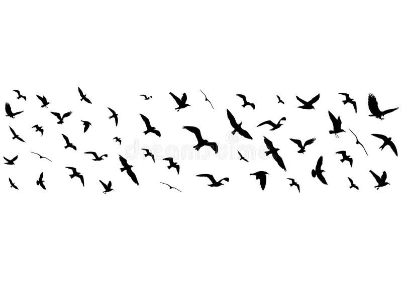 Konturer För Flygfåglar På Vit Bakgrund Vektor