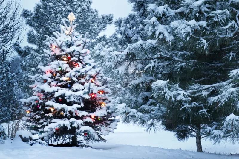 Lalbero Di Natale Innevato Sta Brillantemente Fuori Alla