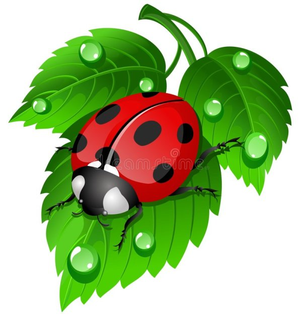 ladybug leaf stock vector. illustration