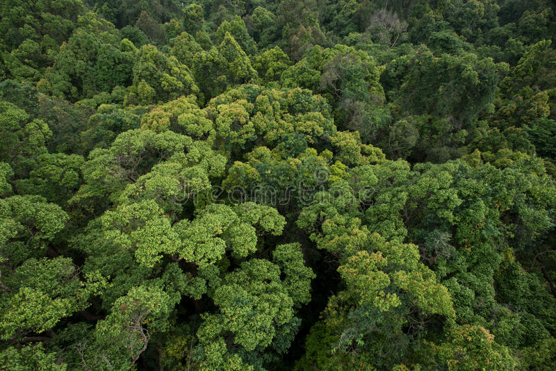 tropical forests exhibit a wide variation in patterns of vegetative and reproductive phenology on both large and small geographic scales (morellato et al. 21 765 Image Tropical Evergreen Forest Photos Free Royalty Free Stock Photos From Dreamstime