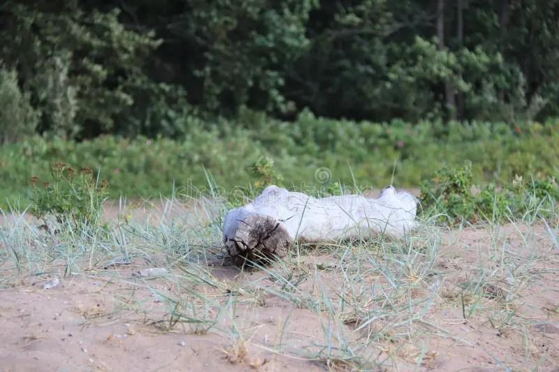 777 bois mort sur la plage de sable