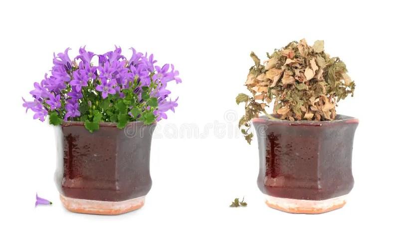 Bloemen In Pot.Bloemen In Pot