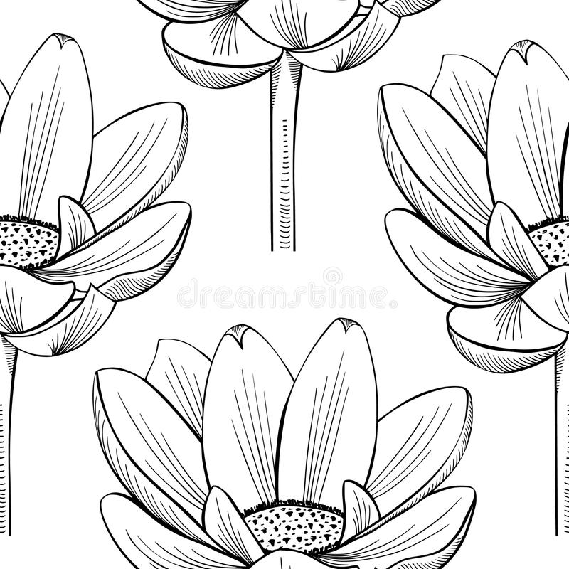 Lotus Lily Water vector illustratie. Illustratie bestaande