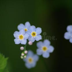 Small Blue White Flower Center Gardening Flower And Vegetables