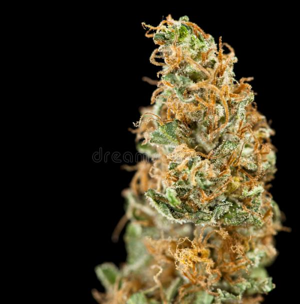 Marijuana Black Stock Of Drugs Addiction