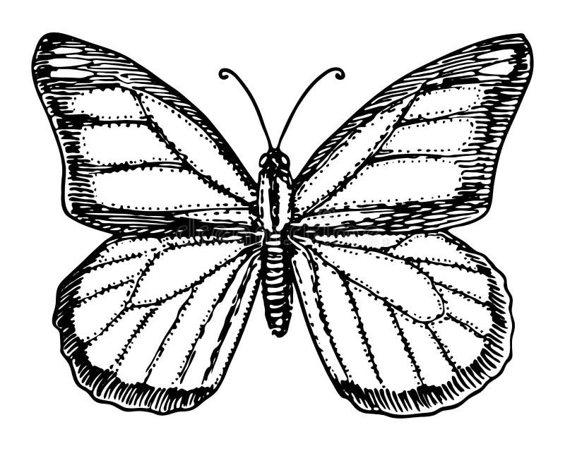 Mariposa De Monarca Hermosa Aislada En El Fondo Blanco
