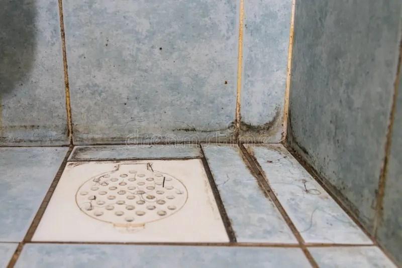 Mildew Dirty Unhygienic Mold Growing On Bathroom Wall ...