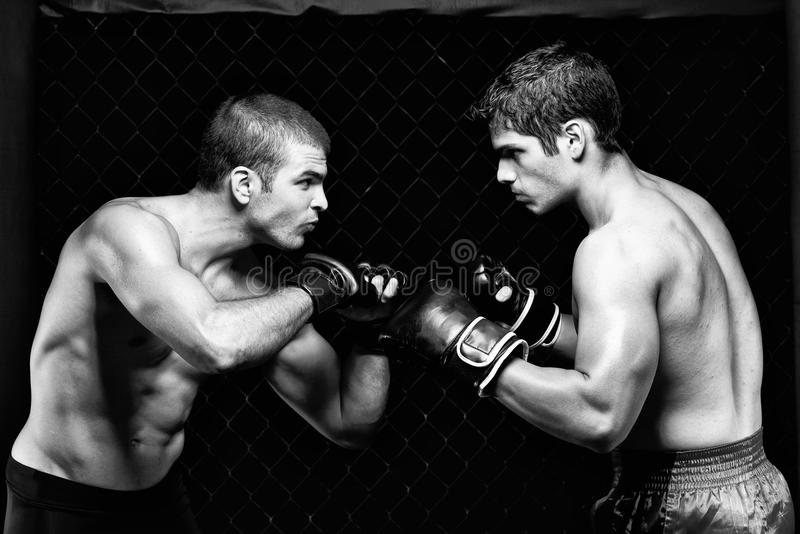 mma stock images download