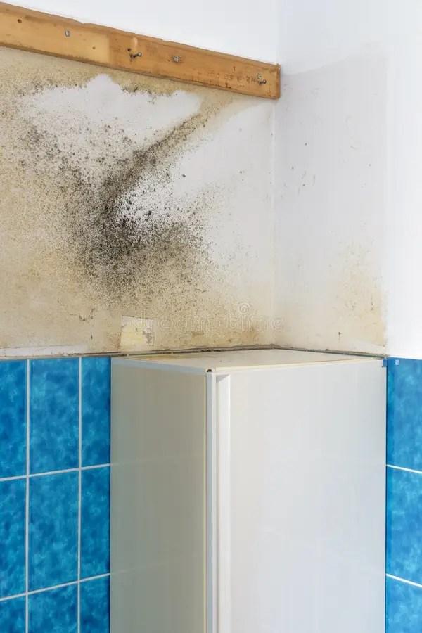 Moldy Mildew On A Bathroom Wall Stock Photo - Image of ...