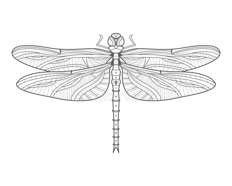 Monochrome Outline Of Dragonfly Stock Vector