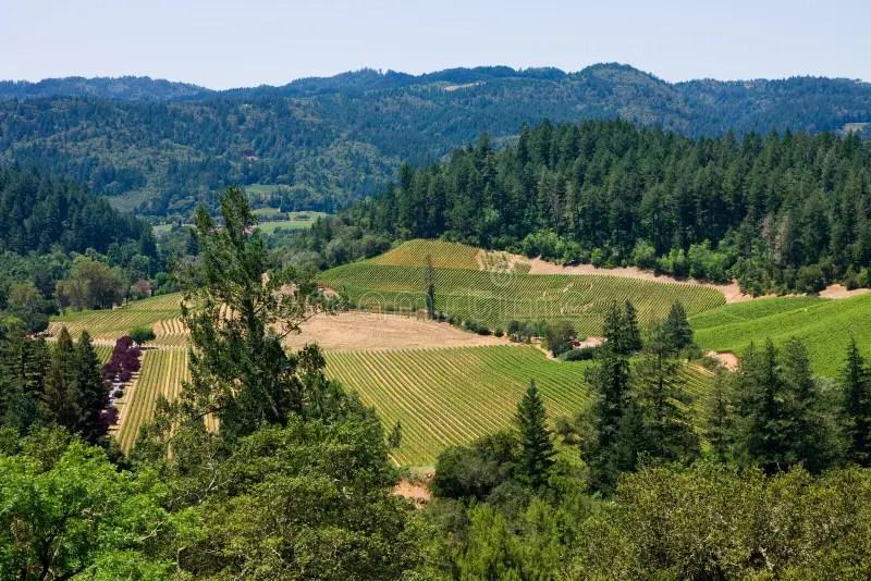 Napa Valley Stock Photos  Image 25058653