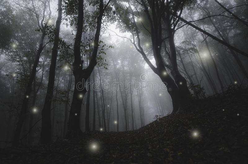Mystical Creatures In The Fall Wallpaper Night In Magic Enchanted Fairy Tale Forest Stock Image