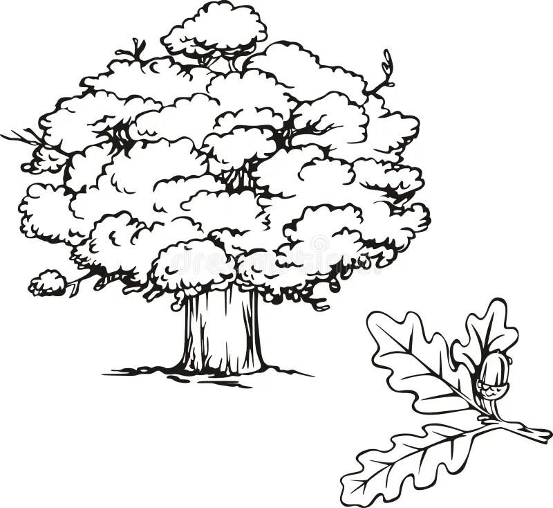 The Branch Of Oak Tree Stock Vector