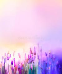 Oil Painting Violet Lavender Flowers In The Meadows Stock ...