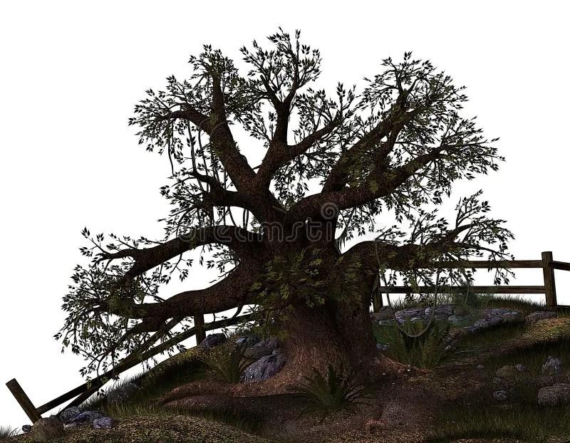 Old gnarled tree stock illustration. Illustration of nature - 28796290