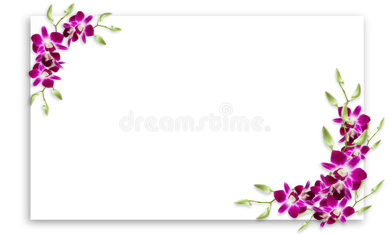 Orchid Flowers Frame With White Copy Space. Stock Image