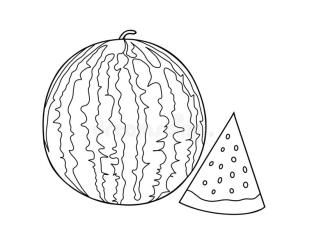 watermelon outline drawing slices coloring