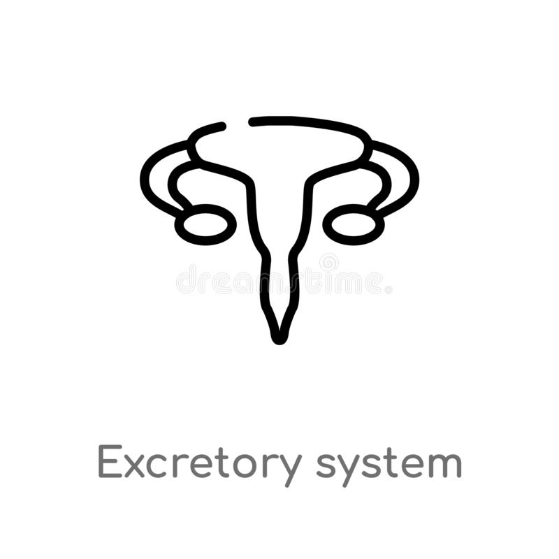 Urinary system stock vector. Illustration of medicine