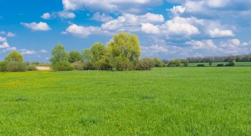 Paesaggio Con La Marcita Alla Stagione Primaverile Immagine Stock  Immagine di possa fresco