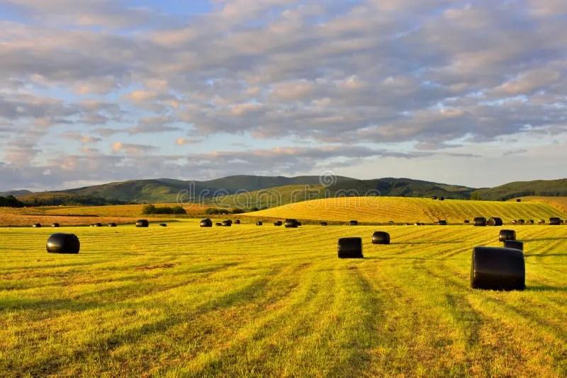 Paesaggio Dello Scottish Della Pianura Fotografia Stock