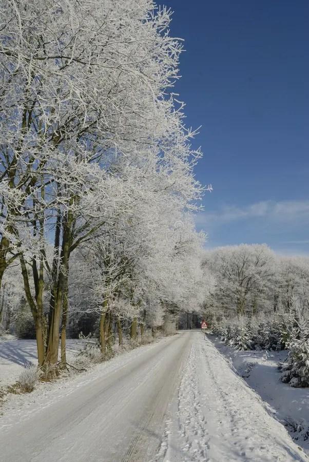 Paesaggio Di Inverno Con La Brina Immagine Stock  Immagine di alberi stagione 67518379