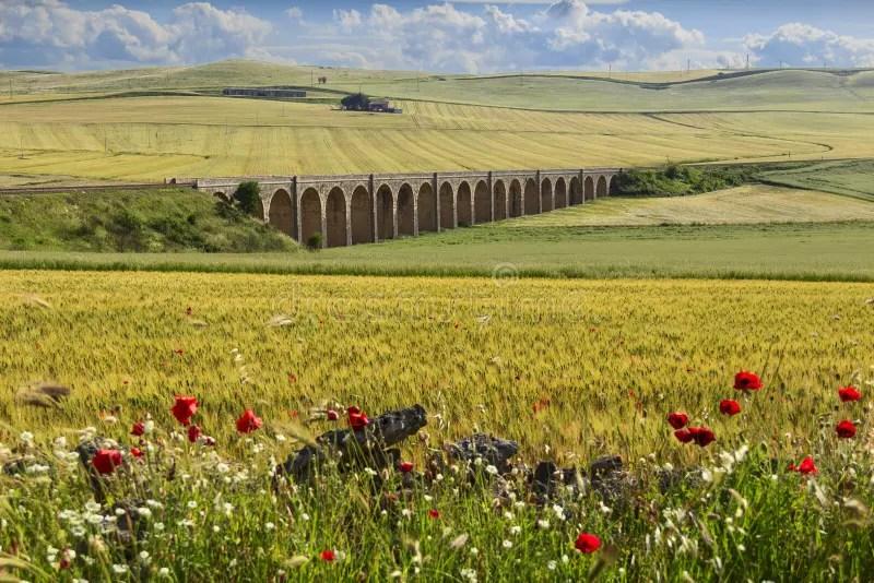 Paesaggio Rurale Della Primavera Ponte Ferroviario Sul Giacimento Di Grano Verde Puglia L