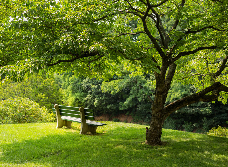 lawn chair with shade desk office depot park bench under flowering dogwood tree stock photo - image of garden, chair: 42361280