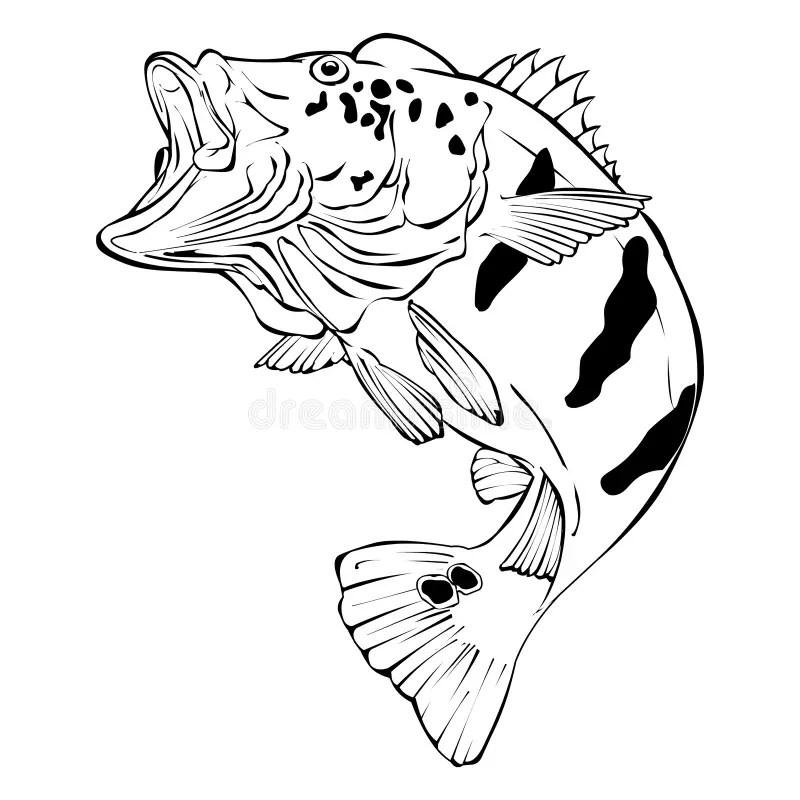Peacock Bass Vector Illustration Stock Illustration