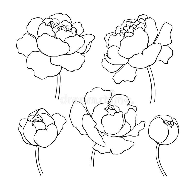 Vector Outline Flowers Sketch Set Stock Vector