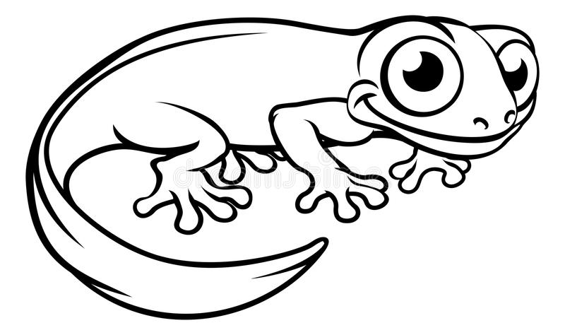 Dessin Salamandre