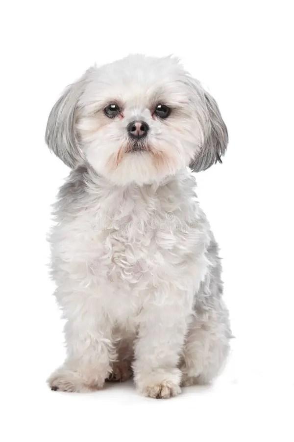 Piccolo Cane Del Maschio Di Canguro Gigante Fotografia Stock - Immagine di nazionale. colpo: 24481050