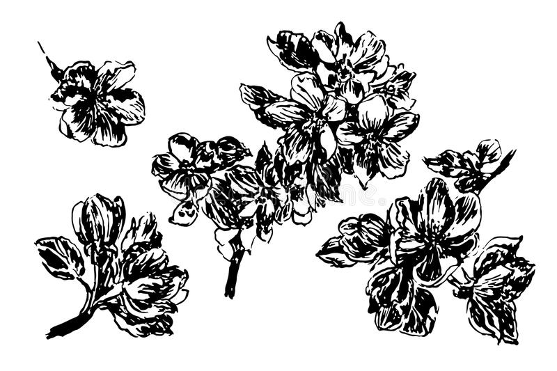 A Set Of Graphics Apple Blossom Branch Stock Illustration
