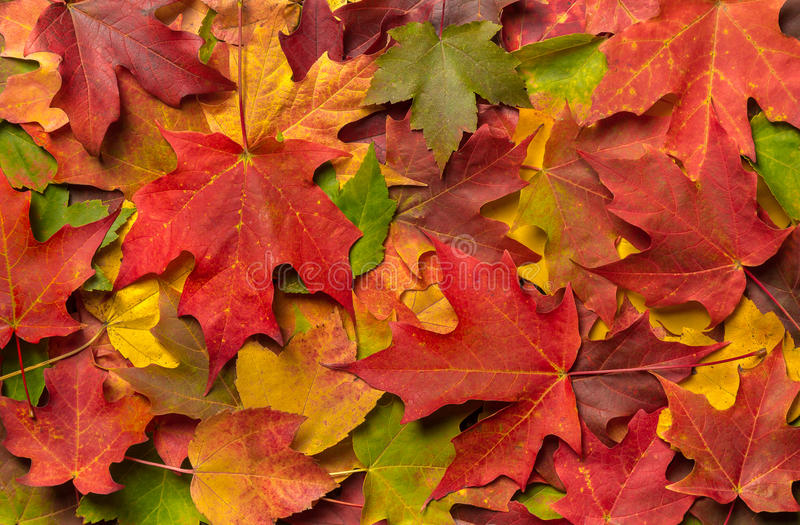Hd Wallpaper Texture Fall Harvest Colorful Autumn Fall Leaves Stock Photo Image 45499124