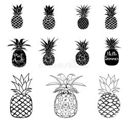 Pineapple Vector Black And White Three Different Outlines Vector Illustration Stock Vector Illustration of isolated juicy: 173980706