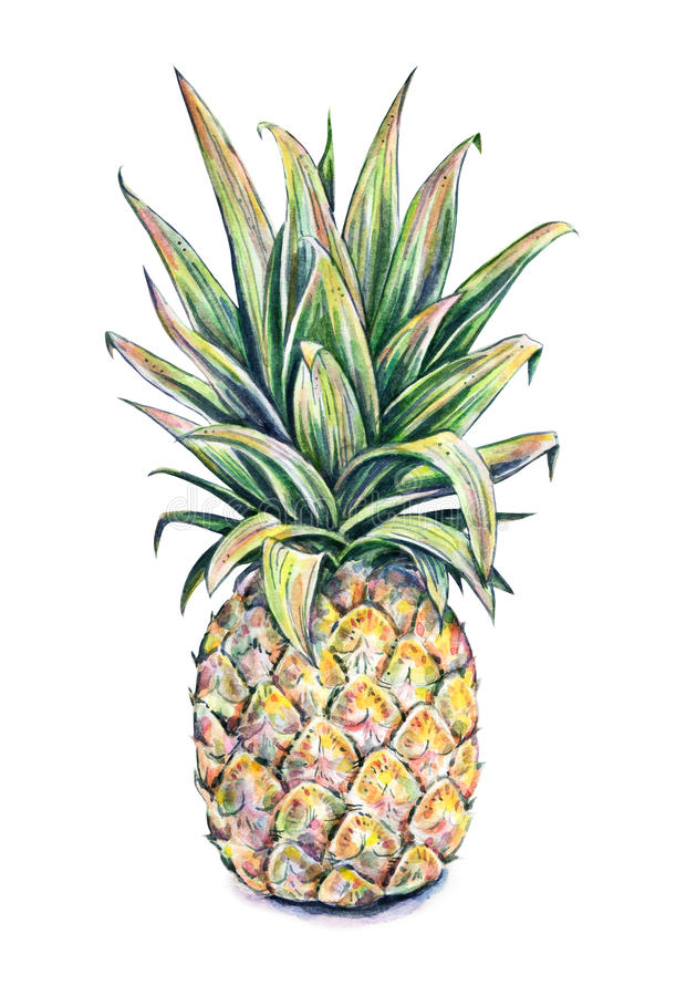 Cute Colourful Wallpapers Free Download Pineapple On A White Background Watercolor Colourful