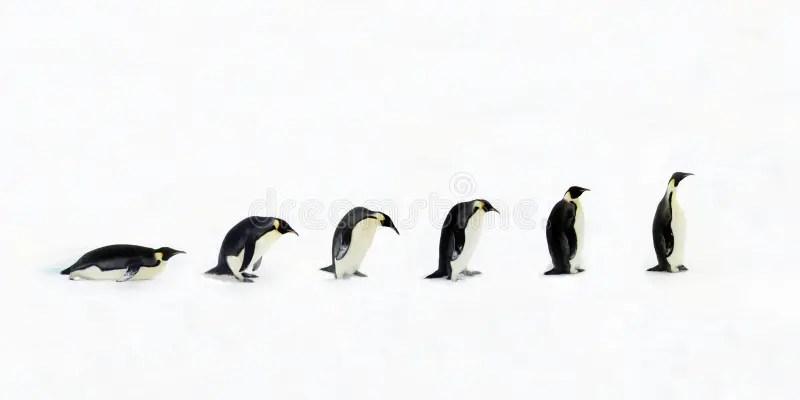 Pinguin-Entwicklung stockbild. Bild von nave, penguin