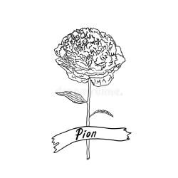 Flower Stem Outline Stock Illustrations 11 785 Flower Stem Outline Stock Illustrations Vectors & Clipart Dreamstime