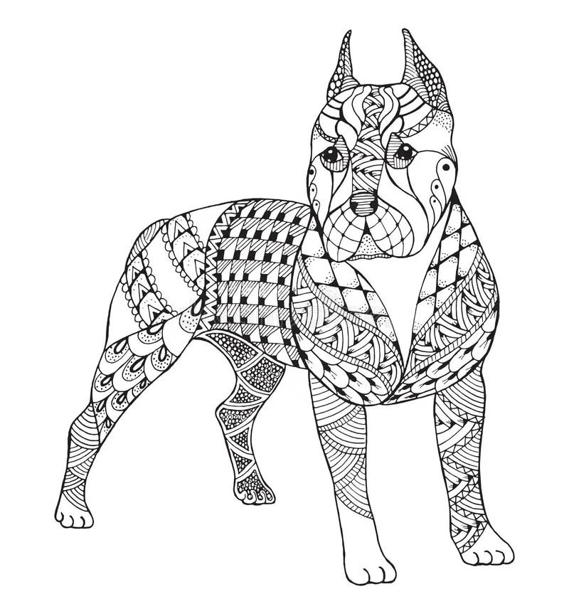 Pit Bull Terrier Zentangle Stylized, Vector, Illustration