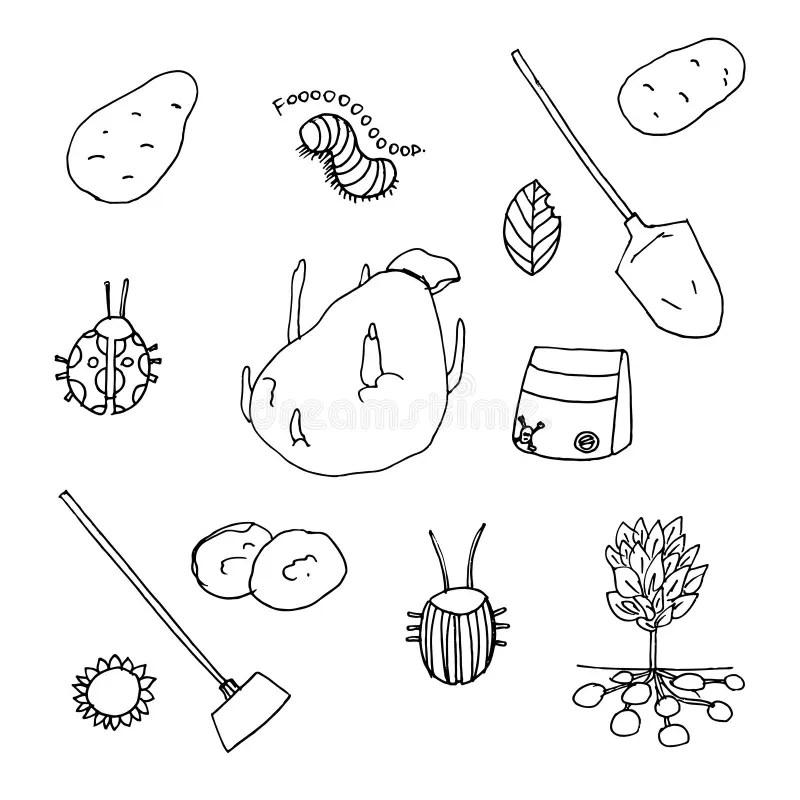 Potato Growing Stock Illustrations