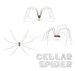 cartoon cellar illustrations vectors vector
