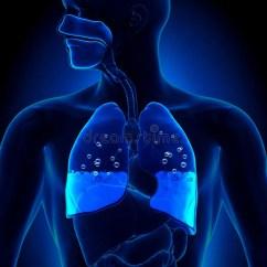 Lungs Human Anatomy Diagram Dodge Grand Caravan Parts Pulmonary Edema - Water In Stock Illustration Image: 41620913